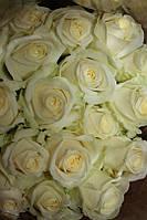 Цветы живые розы белые