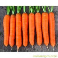 Семена Моркови Колтан F1 (1,8-2,0мм) 100 000 семян