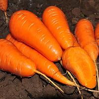 Семена Моркови Ред Кор  F1 1000г Nunhems