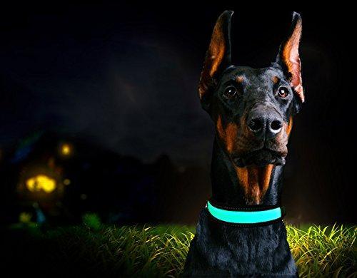 Светящийся  LED ошейник для собак Pevor USB аккумуляторный водостойкий
