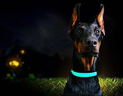 Светящийся  LED ошейник для собак Pevor USB аккумуляторный водостойкий, фото 2
