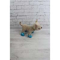 Башмачки голубые с бантиком - одежда и обувь для собачек Чи Чи Лав (Chi Chi Love)