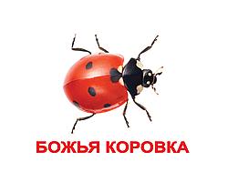 """Карточки большие русские с фактами """"Насекомые"""" 20 шт 095269"""