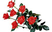 Поздравляем наших женщин с праздником 8 марта!