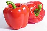Клаудио F1 10 шт семена сладкого перца Nunhems Голландия, фото 3