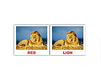 """Карточки мини русско-английские """"Дикие животные/Wild"""" 40 карт, ТМ Вундеркинд с пеленок  096761"""