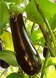 Фабина F1 5 г(~1000 шт) Clause семена баклажан, фото 2