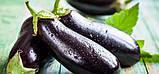 Фабина F1 5 г(~1000 шт) Clause семена баклажан, фото 3