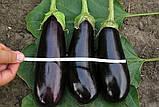 Фабина F1 5 г(~1000 шт) Clause семена баклажан, фото 4