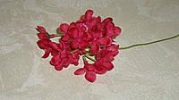 Ветка гортензии мелкой красной, фото 1