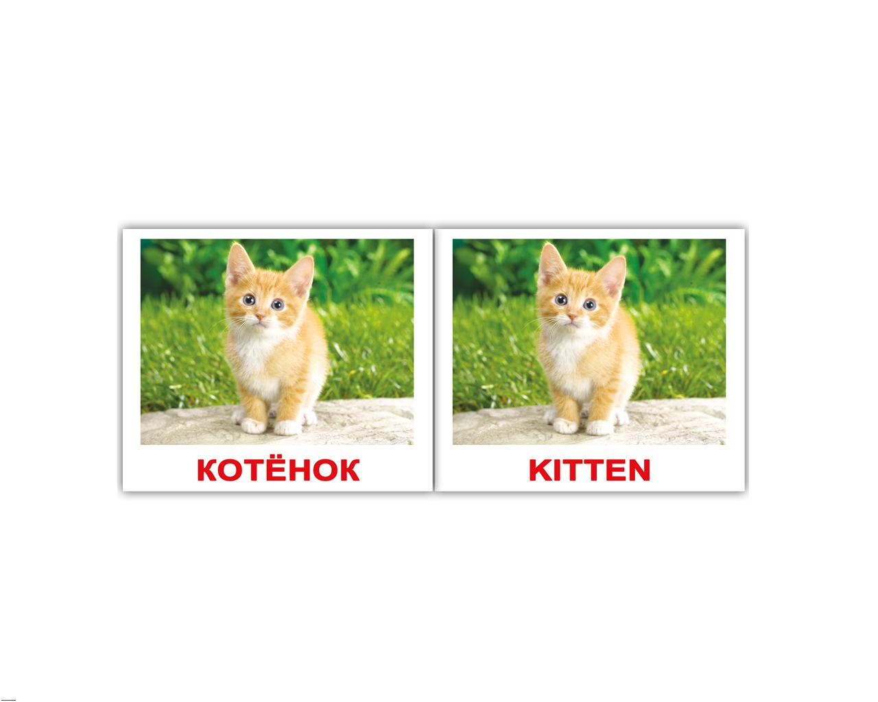 Картинки с животными с подписями на английском