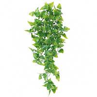 """Растение """"Phyllo"""" пластик, 10х30 см"""