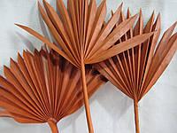 Лист натуральный пальмы окрашенный, в-33-45 см, /(3)