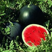 Семена арбуза Мисон F1 (Mison F1), 1000 сем.