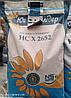 Семена подсолнечника НС Х 2652, фото 3