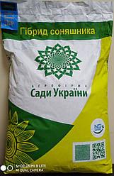 Семена подсолнечника НС-Х-26749 Латитуда