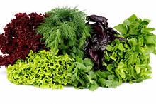 Семена прянно-зеленых культур.