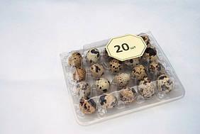 Упаковка для перепелиних яєць на 20 осередків, КОРИЧНЕВА
