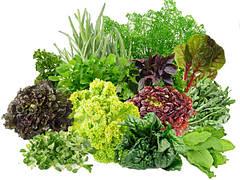 Зелень, Пряности и Лекарственные травы