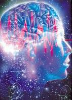 Питание головного мозга и эндокринных желез.