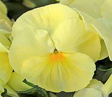 Насіння фіалки Целло F1 лимонно-жовта (1000шт) Hem Genetics