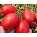 Семена томата Пьетраросса F1 (5000 сем.) Clause, фото 2