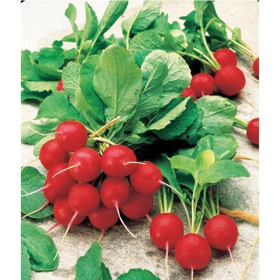 Семена редиса Джолли (500 г)