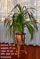 Подставка малая ИЗ ЛОЗЫ на 1 чашу, подставка для цветов, фото 1