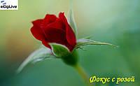 Фокус с розой