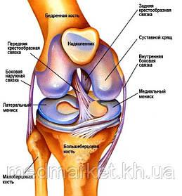 Общая информация о травмах коленного сустава