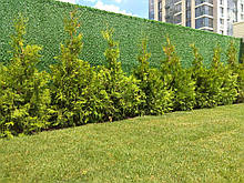 Зелений Забор Mixed Green.