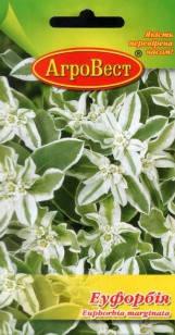 Цветы Эуфорбия 0,5 г (АгроВест), фото 2