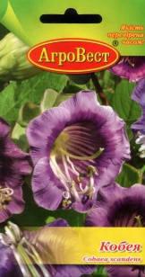 Цветы Кобея фиолетовая 5 сем (АгроВест), фото 2