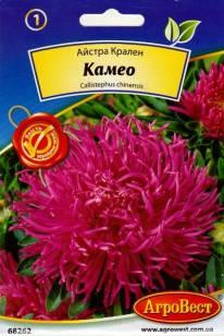 Квіти Айстра Крален Камео 0,3 г (АгроВест), фото 2