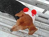 Шапка-снуд для маленькой собаки,шапка для таксы,шапка для собаки до 10 кг, фото 6