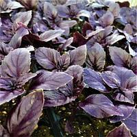 Семена базилика фиолетового Рози (250 г)