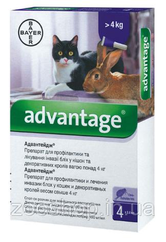 Капли Bayer Адвантейдж 80 от заражений блохами для котов и кроликов свыше 4 кг 4 пипетки, фото 2
