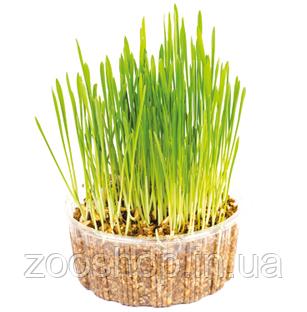 """Трава швидкозростаюча для кішок """"Мікс"""", фото 2"""
