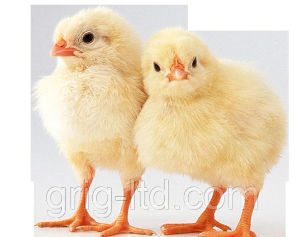 Комбикорм старт для цыплят 10кг