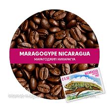 Кава Марагоджип Нікарагуа