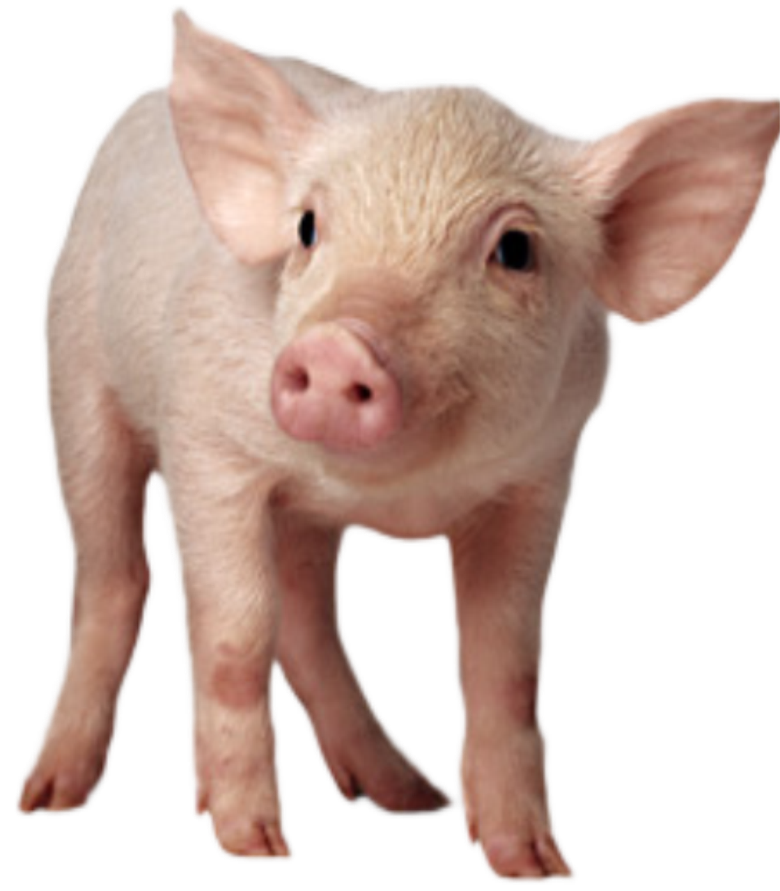 БВМД для свиней (от 41-81дня) Стартер СТАНДАРТ 25/20%