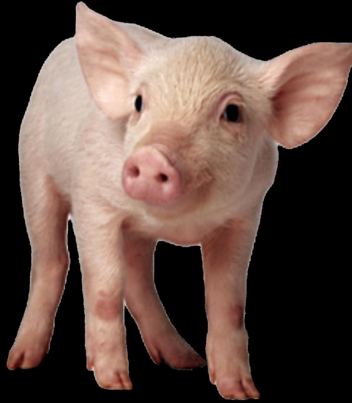 БВМД для свиней (от 41-81дня) Стартер ОПТИМУМ 25/20%