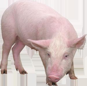 БВМД для свиней (от 82 до 120 дня) Гроуер МАХ 15%