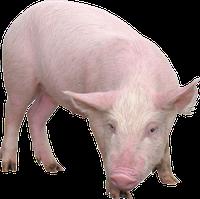 БВМД для свиней (от 82 до 120 дня) Гроуер МАХ 15%, фото 1