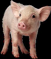 БВМД для свиней (от 41-81дня) Стартер МАХ 25/20%