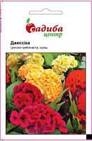 Насіння однорічних квітів Целозія гребінчаста Джессіка, суміш 0,03г Садиба Центр