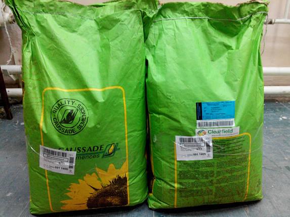 Подсолнечник ШАРКС КС  (заразиха A-G), 90-97, 49% масла, 39ц/га, Caussade Semences, фото 2