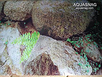 Фон тонкий односторонний высотой 30см(9007) цена за 10см, фото 1