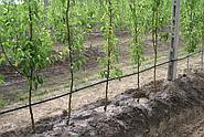 Капельный полив сада