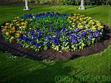 Чорнозем, земля для квітів Київ Земля для троянд Грунт для квітів Київ, фото 4